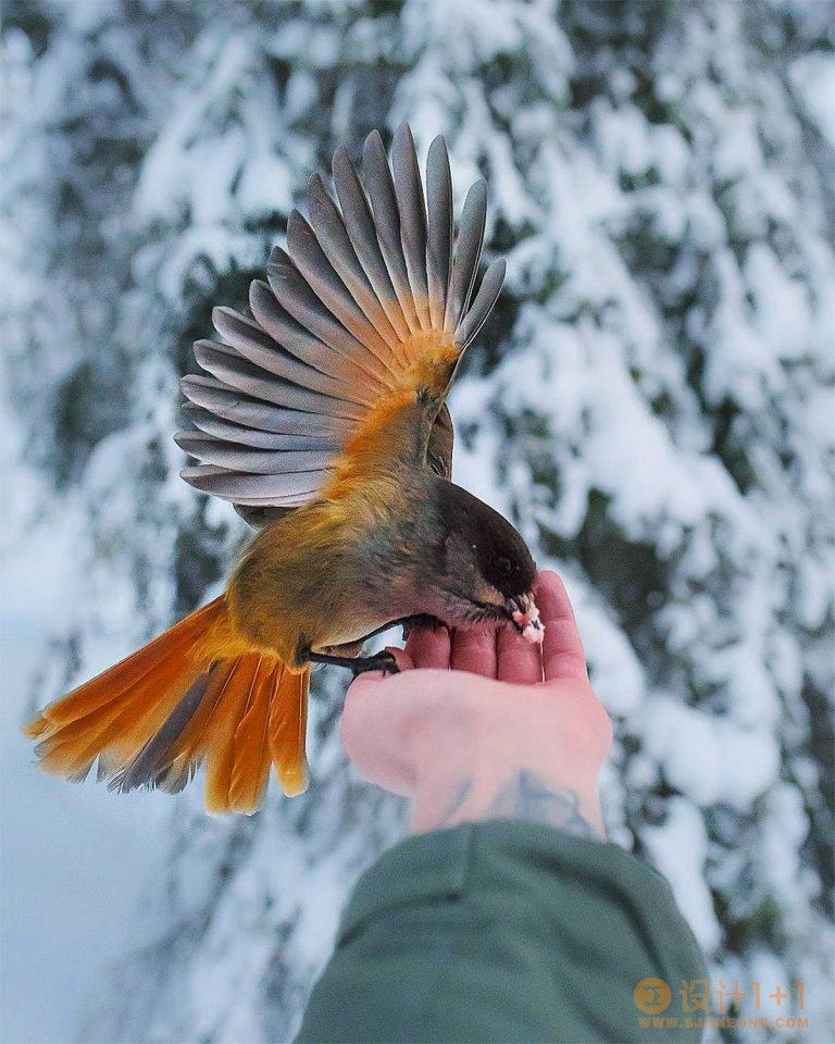 Joachim Munter动物肖像摄影作品